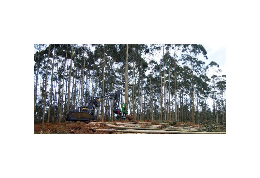 La madera capea la crisis con bajadas de precio en el eucalipto y ralentización de talas en el pino